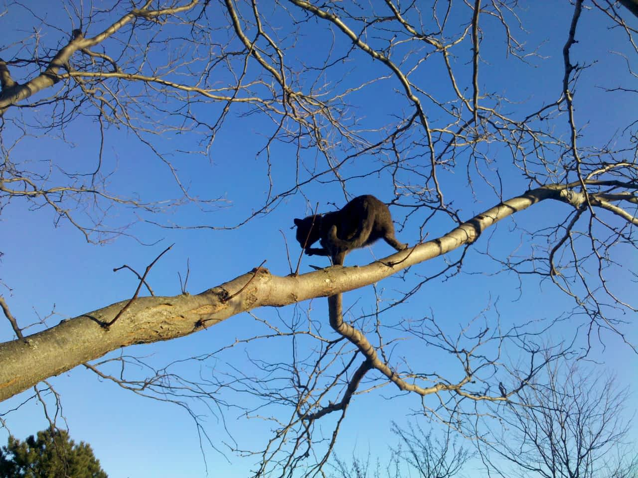 Buddy in a tree